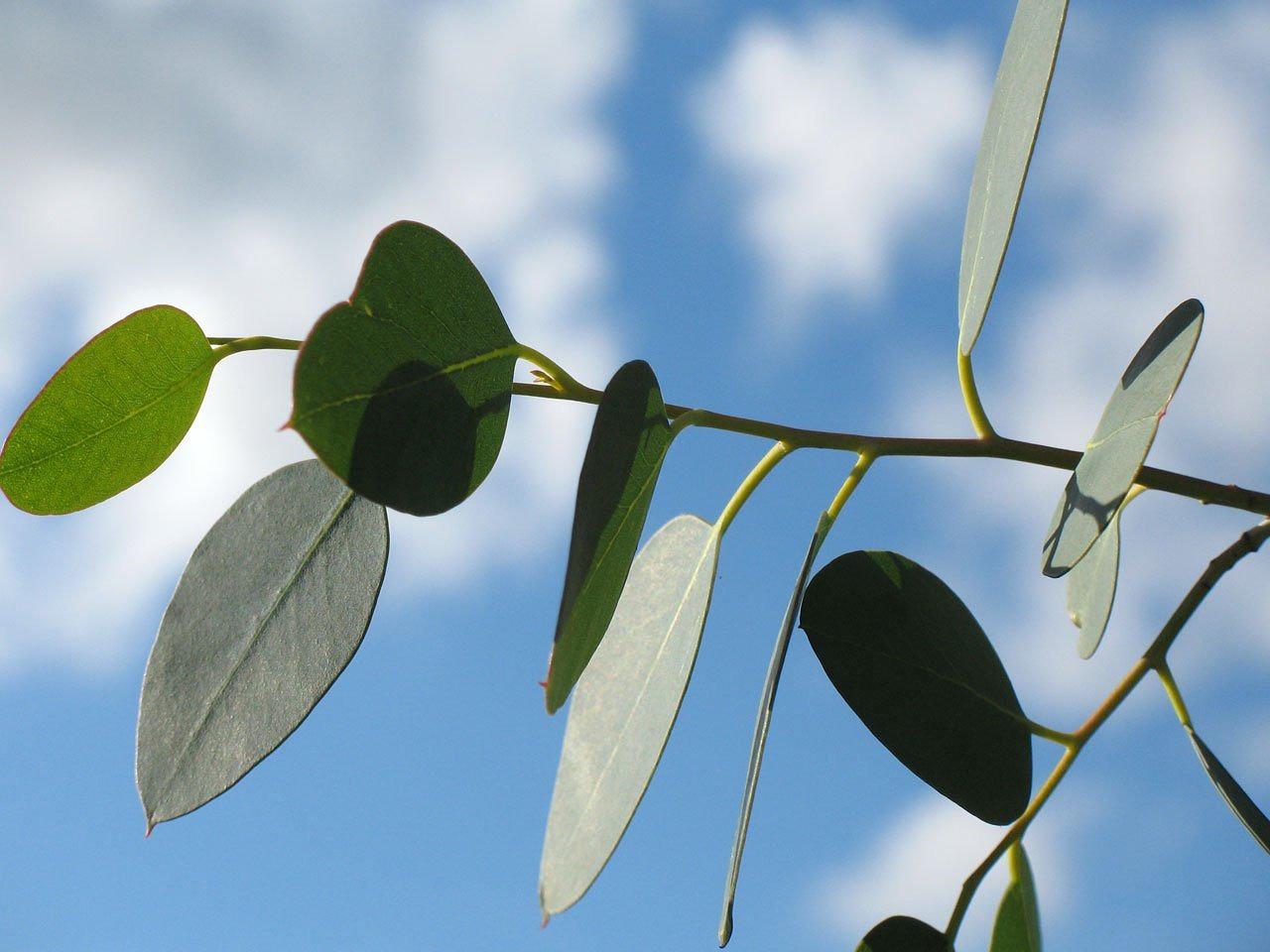 Eucalyptus tencel vegan dekbed