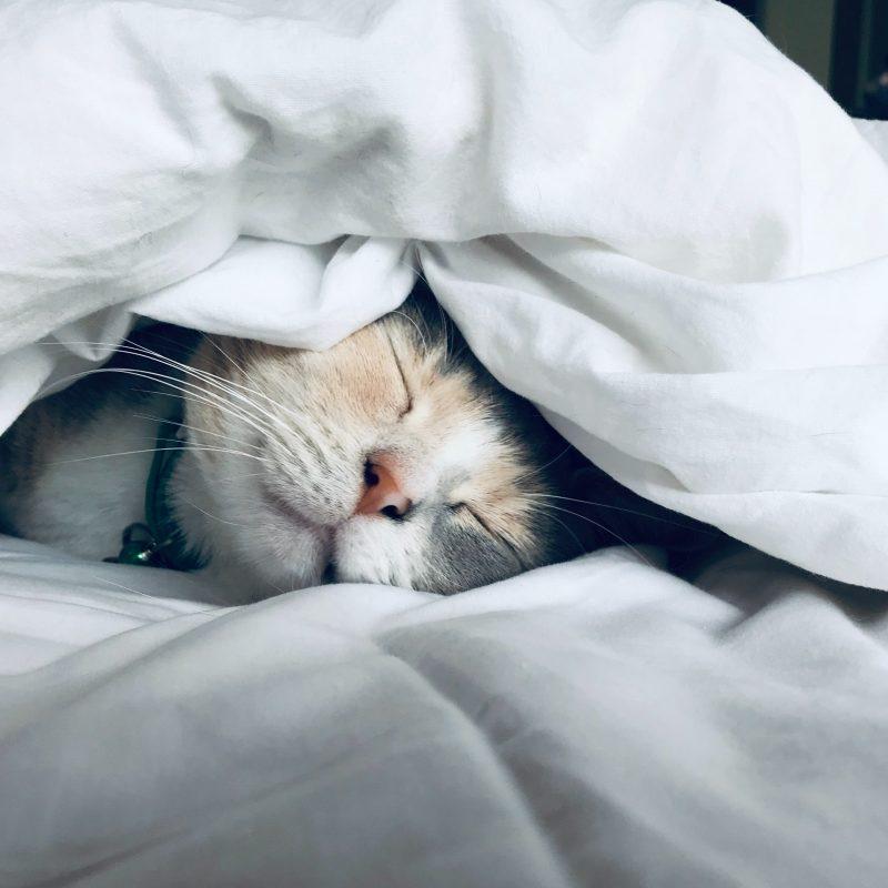 slaapgewoonten-kat